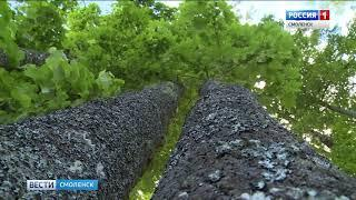 Смоленская область вошла в число самых чистых регионов страны
