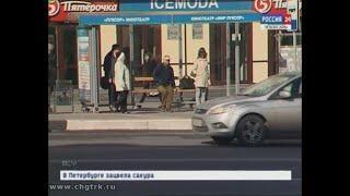 На чебоксарских остановках по утрам звучат песни военных лет