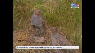 Визит-центр в заповеднике «Присурский» расскажет о флоре и фауне Чувашии