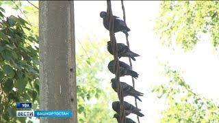 Юные уфимские орнитологи вышли на подсчет птиц