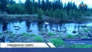 Лебединое озеро в Рыбнице