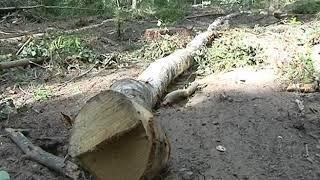 Специалисты выясняют законность вырубки лесного массива  в Некрасовском районе