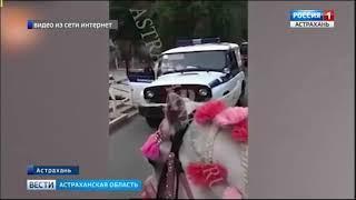 Без погон, пуговиц и нагрудного знака остался астраханский полицейский во время задержания наездницы