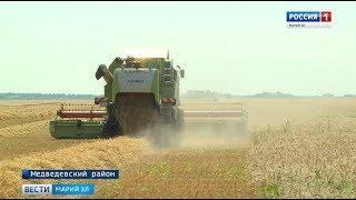 Племзавод «Шойбулакский» планирует заготовить 45 тысяч тонн зерна