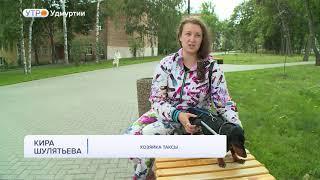 Ижевчанка создала необычную конструкцию - инвалидную коляску для своей таксы