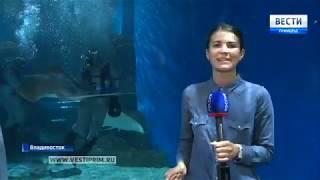 Приморский океанариум отмечает свой второй день рождения