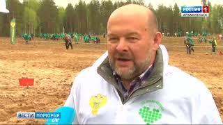 В Устьянском районе прошёл День посадки леса