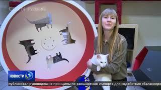 Кот по кличке Ахилл из Санкт-Петербурга стал самым точным предсказателем ЧМ-2018