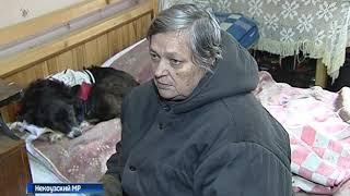 Жители деревни Поздеевка боятся выходить на улицу из-за агрессивных собак