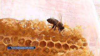 Башкирских пчел предлагают чипировать