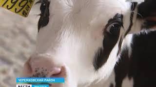 Новые технологии позволяют получать до 40 литров молока с коровы в сутки