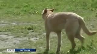 В поселке Ермаково бродячая собака укусила ребенка за лицо