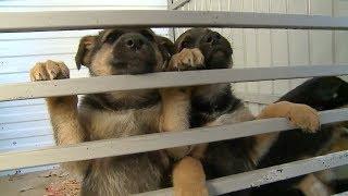 Пропала собака  В Саранске волонтеры ищут животное, которые уцелело после отстрела