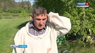 Пчеловоды Брянщины открыли сезон