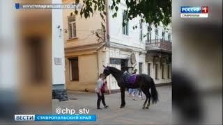 Следствие проверяет  инцидент с лошадью в  центре Ставрополя