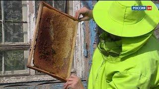 «Дача»: «Дача»: как правильно подкармливать пчел после зимовки?