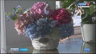 Новые коллекции домашних цветов в  оранжерее Садового центра