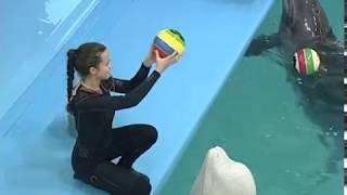 23 июля — Всемирный День кита и дельфина