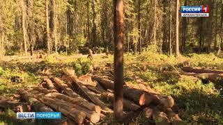 Указом губернатора Архангельской области в лесах региона введен особый противопожарный режим
