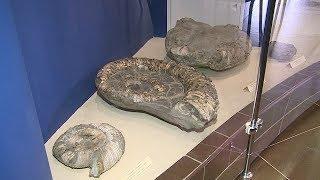 В краеведческом музее Мордовии появился уникальный доисторический экспонат