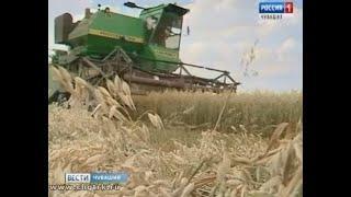 Чувашские аграрии вышли на уборку зерновых