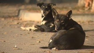 Жители поселка Южный обеспокоены засильем бродячих собак