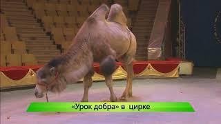 ИКГ Урок добра в цирке #6