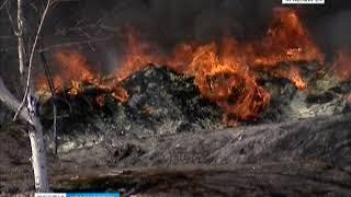 В крае потушили первый в этом году лесной пожар