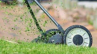 Владельцев торговых точек Нефтеюганска обяжут косить траву