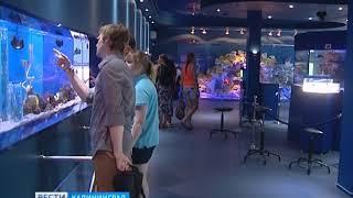 В Музей Мирового Океана привезли стёкла для главного аквариума