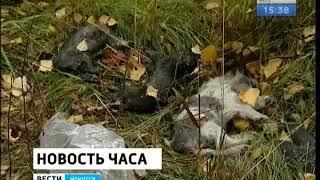 14 убитых щенков обнаружили на окраине Иркутска  Зоозащитники намерены обратиться в полицию