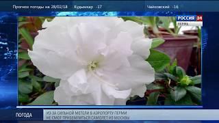 В Ботаническом саду распустились тропические цветы