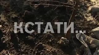 Работы по озеленению в микрорайоне Мещерской озеро вызывают у жителей недоумение