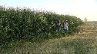 Мордовское агропромышленное объединение заканчивает убирать зерно и хвалится свёклой