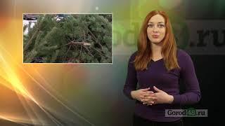 Где в Липецке больше всего выбрасывают елки?