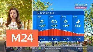 """""""Утро"""": солнечная сухая погода ожидается в столичном регионе 9 августа - Москва 24"""