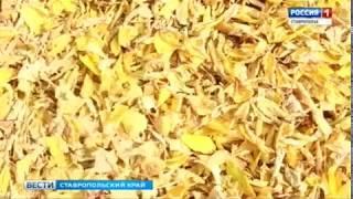Золотая осень на Ставрополье