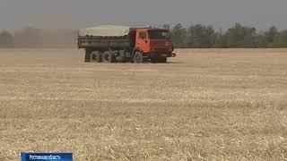 На Дону в этом году соберут около 10 млн тонн зерна