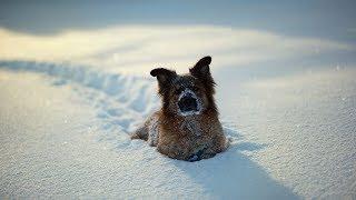 В Урае хозяин спас собаку из снежной ловушки