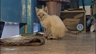 В одном из подъездов Ханты-Мансийска борется за жизнь крошечный котёнок