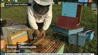 Пчеловоды в Качугском районе готовят пчёл к зиме  От этого зависит, будет ли щедрым следующий медоно