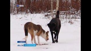 Жительницу Советска, выбросившую собак с 4-го этажа, приговорили к исправительным работам