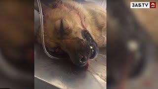 Живодера, который истязал беременную собаку, приговорили к обязательным работам