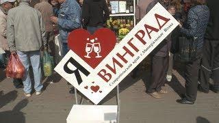 Виноделы Ставрополья представили свои достижения на Фестивале молодого вина в Кисловодске