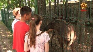 Как организован детский отдых летом в Чувашии и насколько он безопасен?
