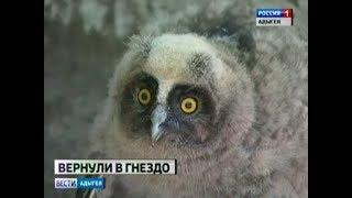 Птенец выпал из гнезда и чуть не стал добычей ворон