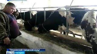 Колымские фермеры освоили дальневосточный гектар