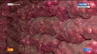 В Волгоградской области собрано уже почти 800 тысяч тонн овощей