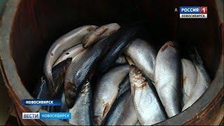 На прилавки магазинов Новосибирска поступила рыба свежего улова