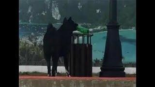 Собака по кличке Мурчик убирает мусор на пляже в Адлере